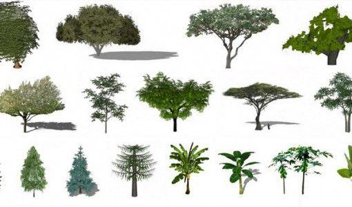 Plantas y rboles para sketchup jardines pinterest for Arbustos para interiores