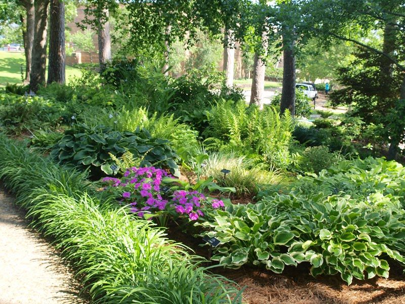 This is a wonderful shade garden i love hostas and ferns for Rock garden designs shade