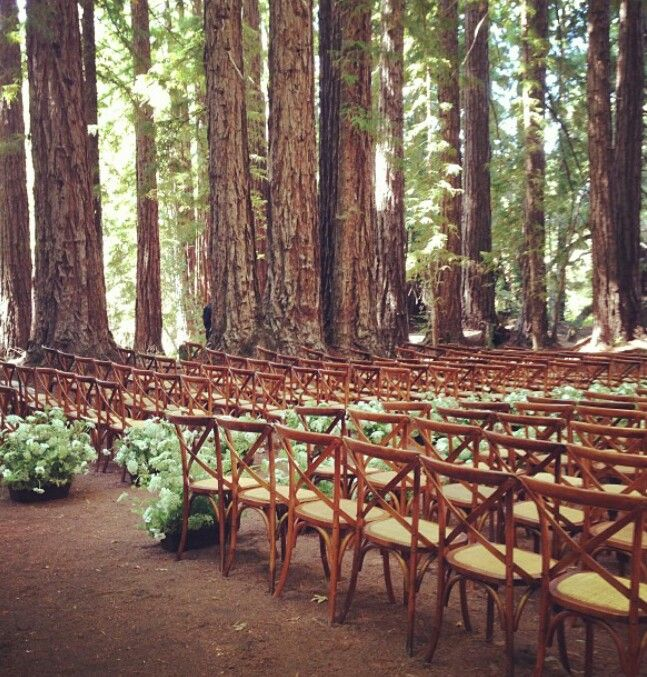 Wedding Venues In The Woods: Wed In The Woods