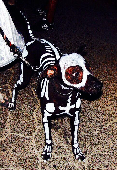 Halloween Skeleton Painted Dog Halloween Skeleton Decorations