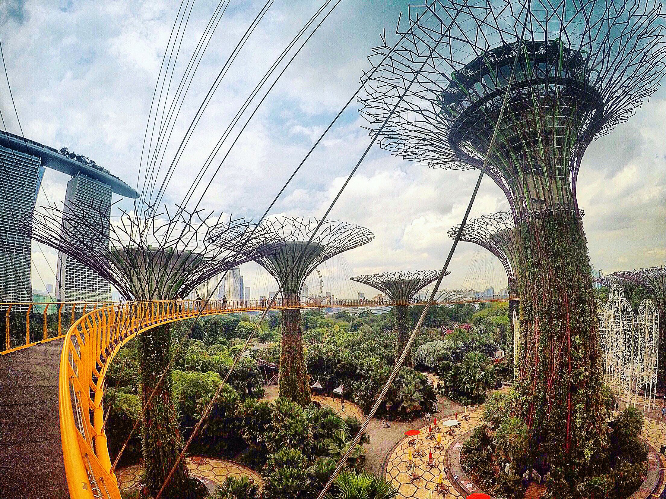 Garden by the Bay and this beautiful blooming Supertree