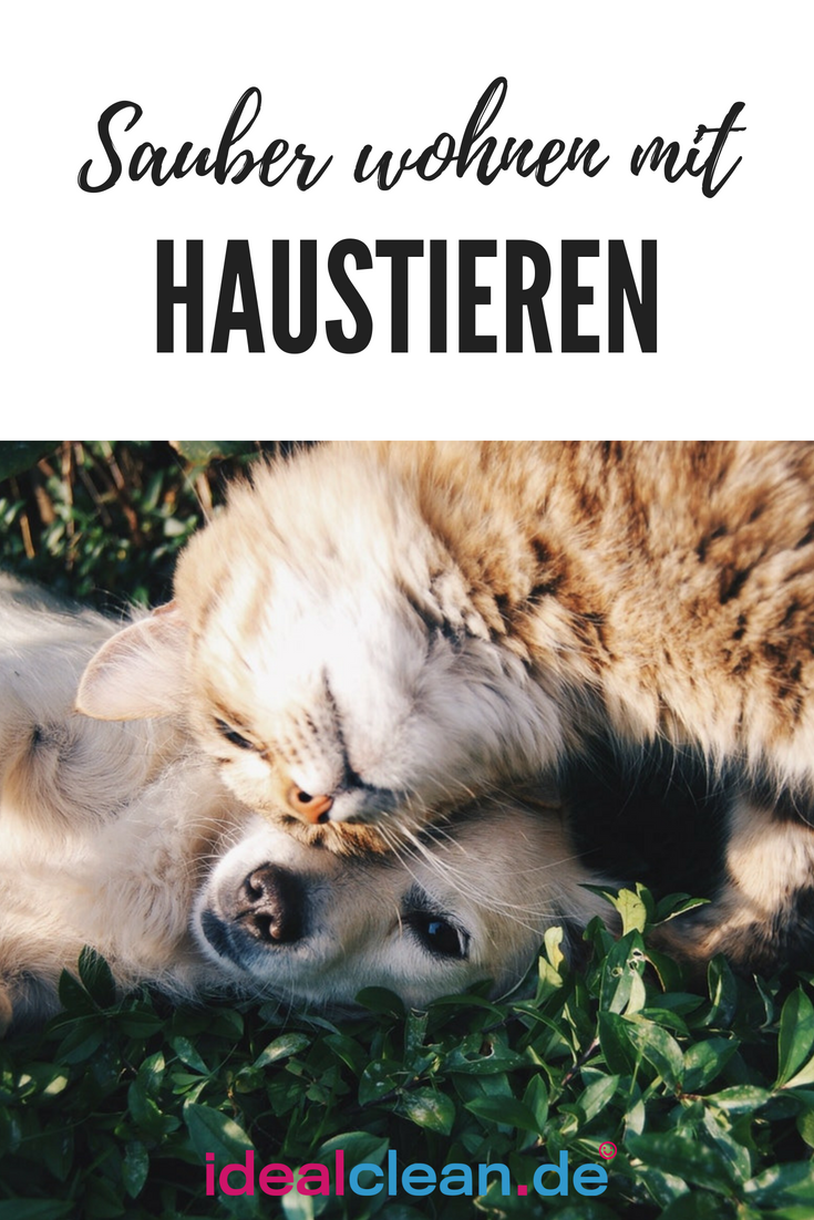 Sauberes Zuhause Mit Haustieren So Geht S Haustiere Hund Und Katze Und Hundeverhalten