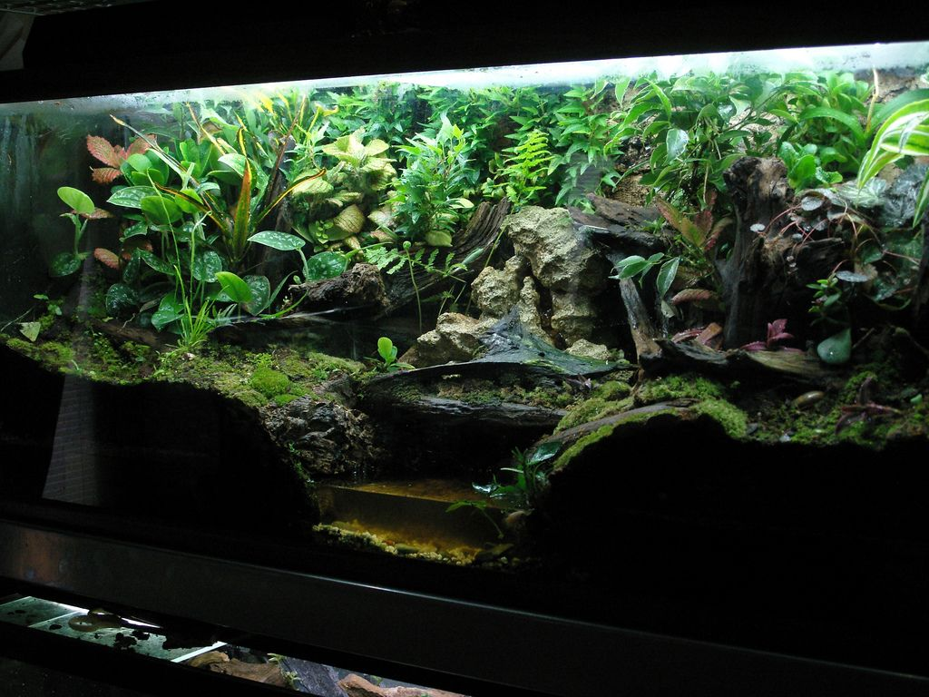 Click The Image To Open In Full Size Vivs Pets Vivarium Frog