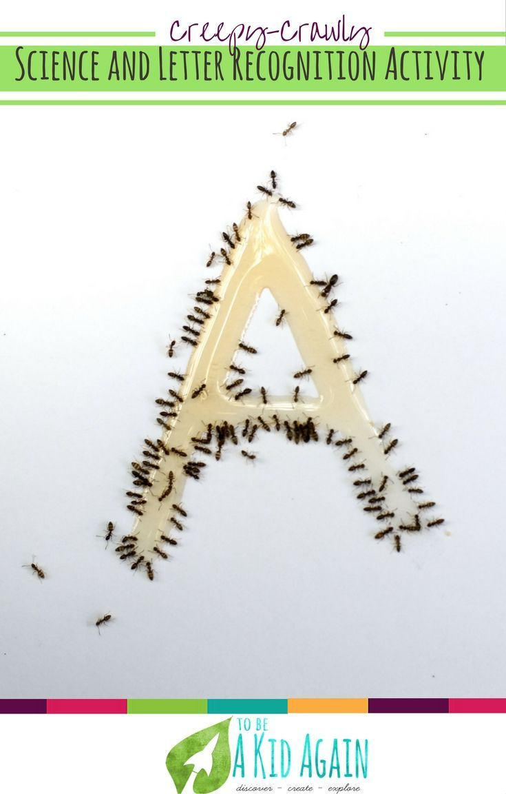 A Is For Ant Activity Kids Won T Forget Creative Little Explorers Ants Activities Letter A Crafts Activities To Do With Toddlers [ 1152 x 735 Pixel ]