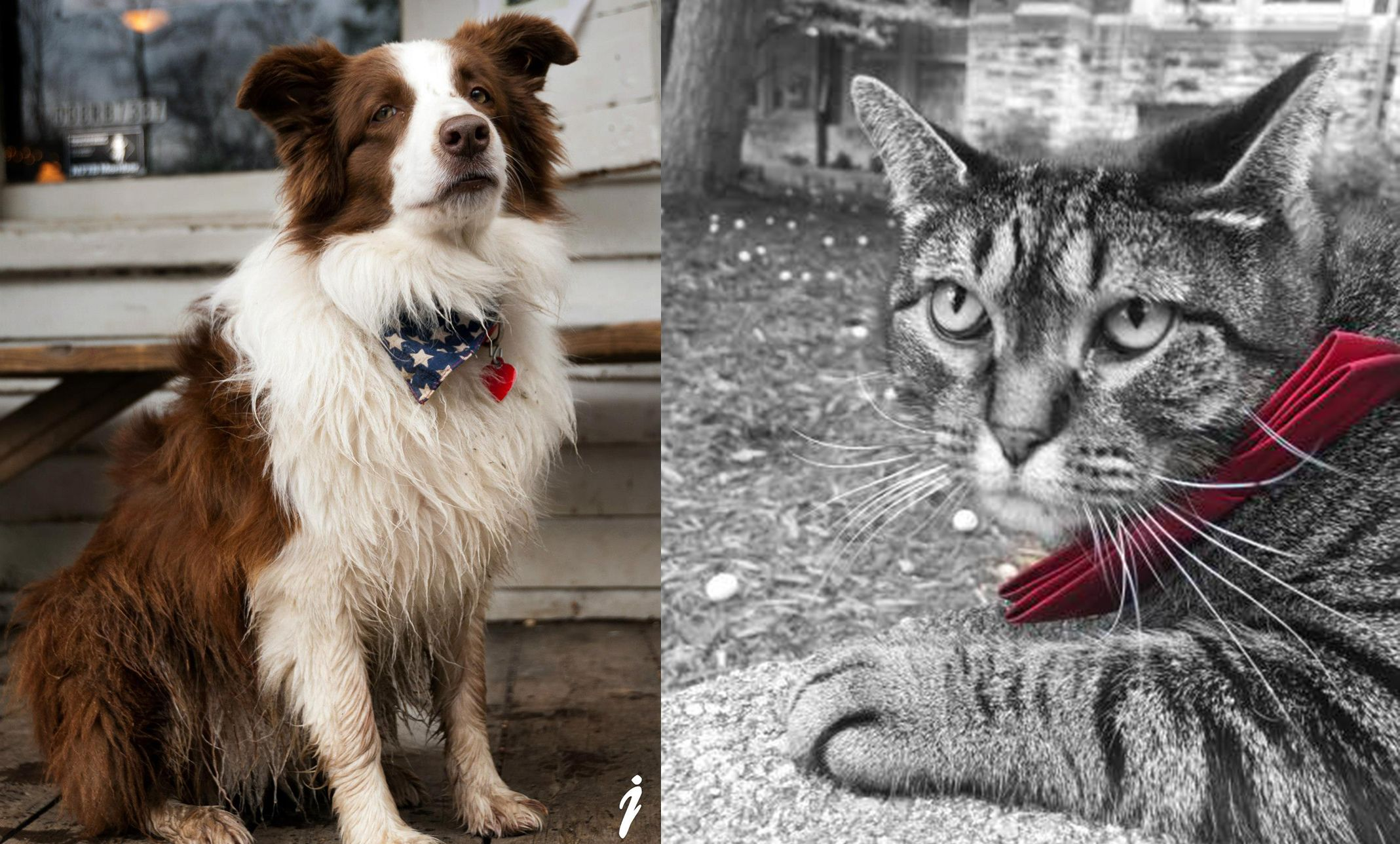 Pets for president? Meet the dog and cat literally running for office