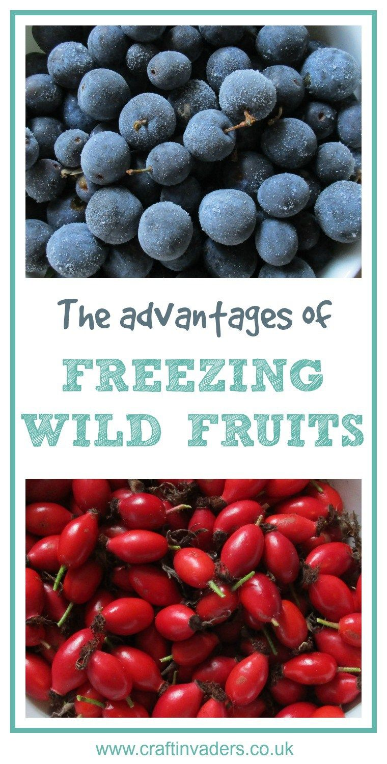 The Best Reasons For Freezing Foraged Fruits Fruit