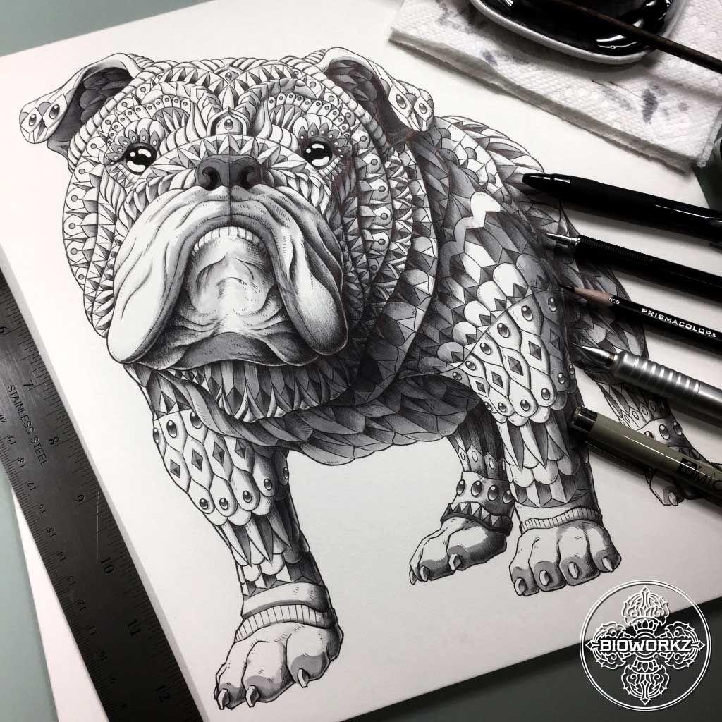 English Bulldog\