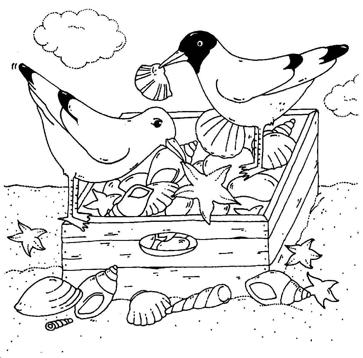 Ausmalbild Vogel Mowen Und Muscheln Kostenlos Ausdrucken Dieren Seizoenen Kinderen