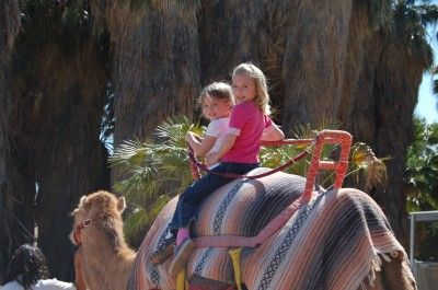 I rode a Camel and an Elephant at the Hogle Zoo in Salt Lake when I was a kid in the 60's! Google Image Result for http://utah.todaysmama.com/files/2011/04/DSC_0082-400x265.jpg