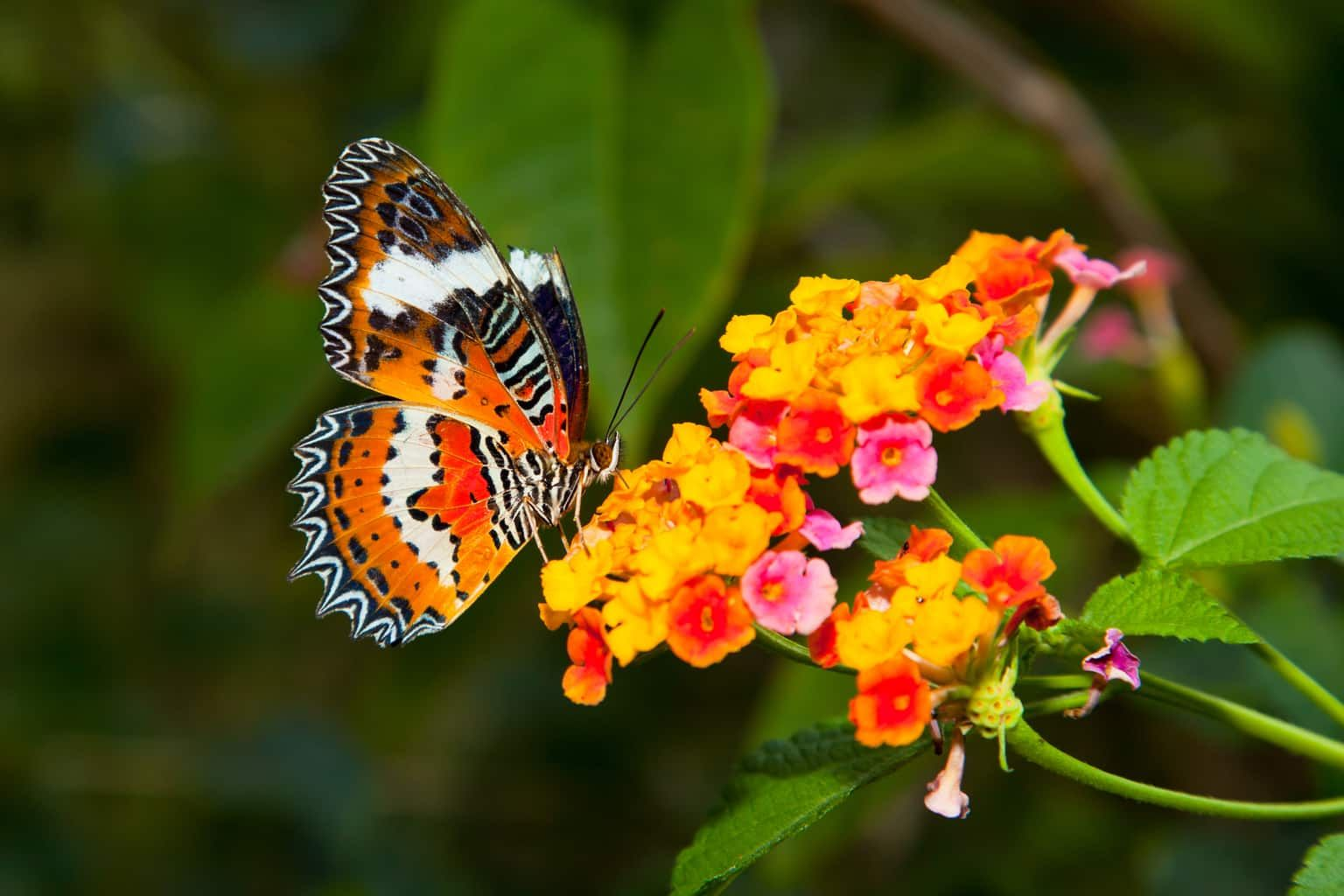 How to Attract Hummingbirds and Butterflies to Your Garden ...