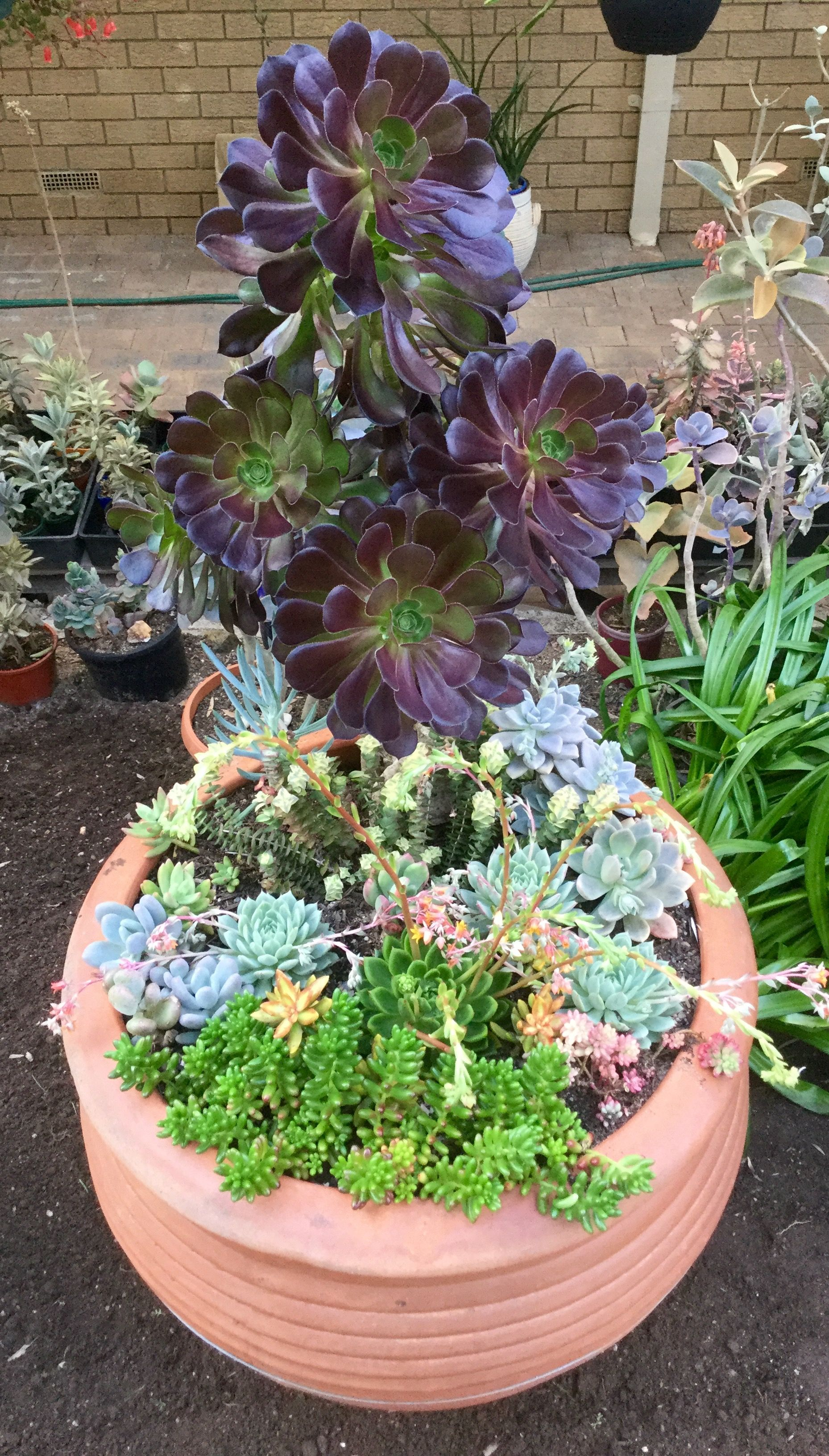 A Very Big Pot Of Mixed Succulents Plants Planting Succulents Succulents