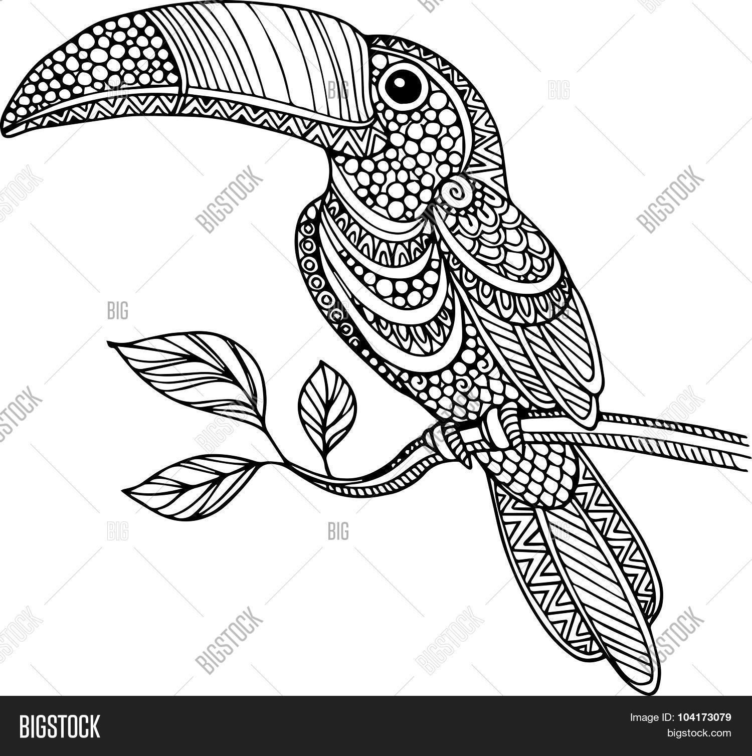Hand Drawn Doodle Outline Toucan Illustration Decorated With