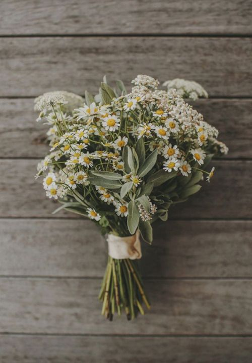 Pin von Montagne de fringues auf FLOWERS & PLANTS | Pinterest ...