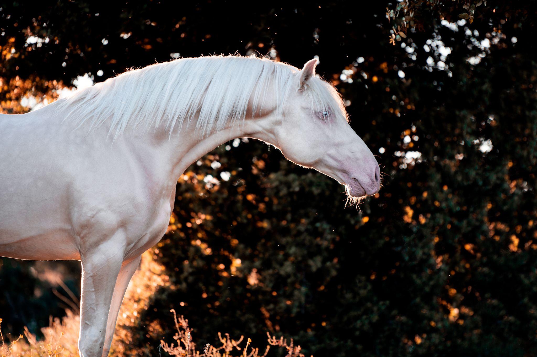 Fotos Pferde In Der Natur I Pferde Fotografie Pferde Pferdefotos