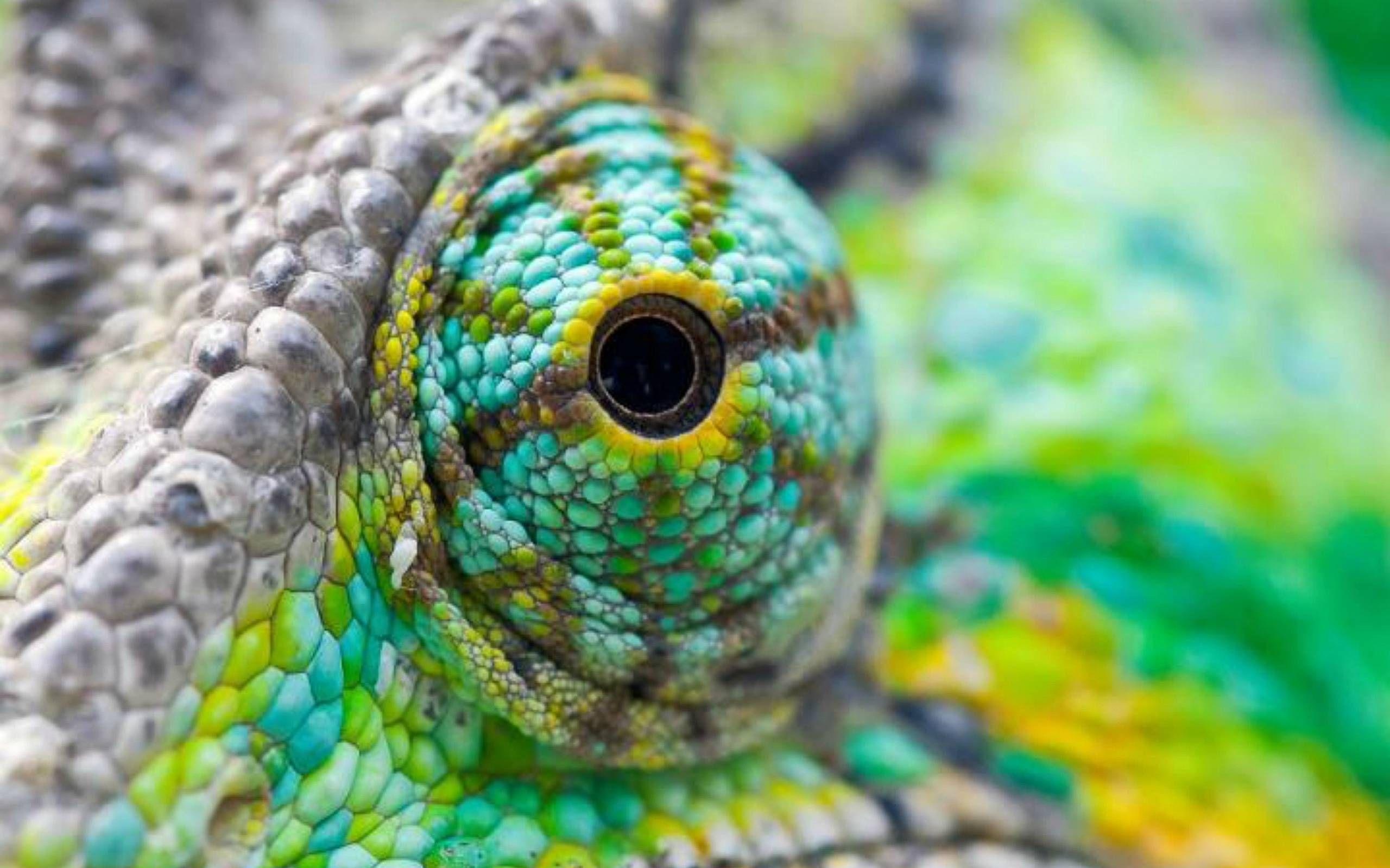 hst7naf 2,560×1,600 pixels | dragons | pinterest | lizards, rabi