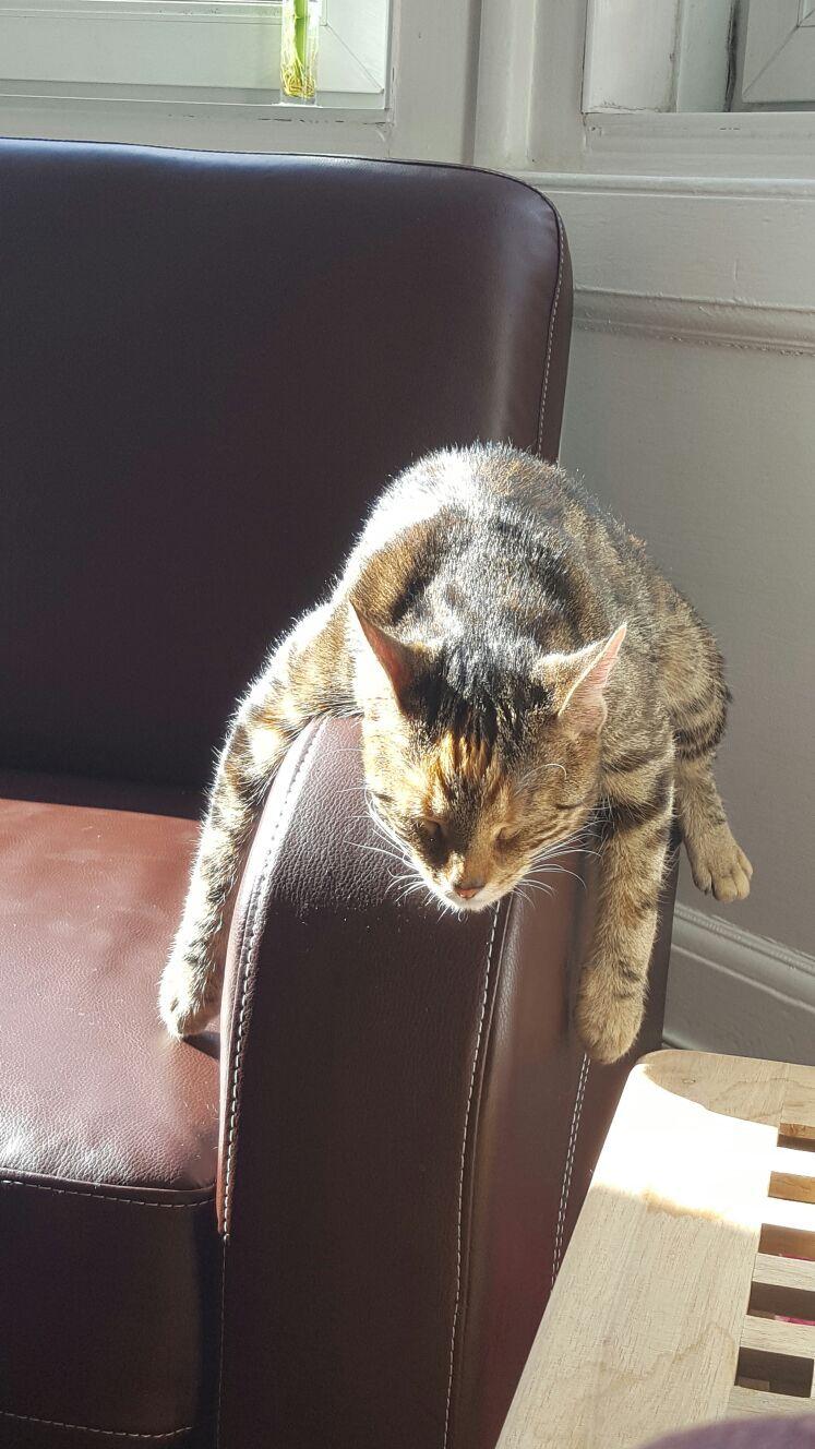 Sunday Morning Sunbathing Goals Tags: #lazy #cats #animals #funny #cute