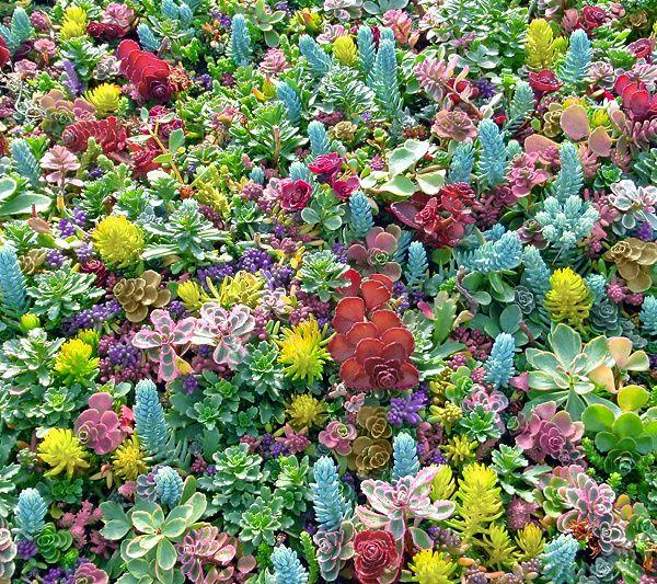 Cottage Farms 2 Piece Party Carnival Sedum Tiles Qvc Com Sedum Fall Plants Emerald Coast