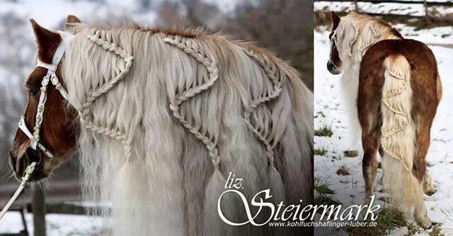 For When A Horse Has Better Hair Than I Do Pferde Frisuren Pferdefrisuren Pferdemahne