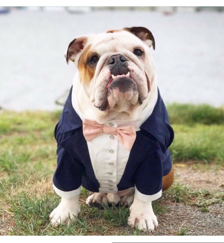 Dapper Dog Reporting For Ring Bearer Duty Navy Blue Dog Tuxedo