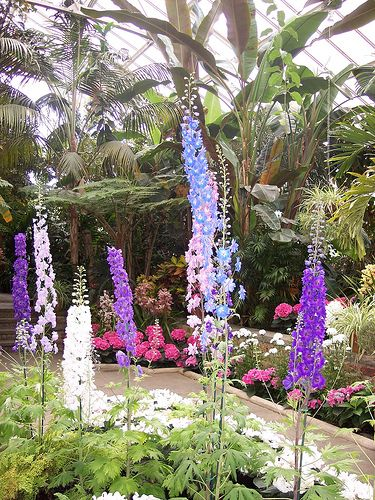 Untitled Botanical Gardens Garden Plants