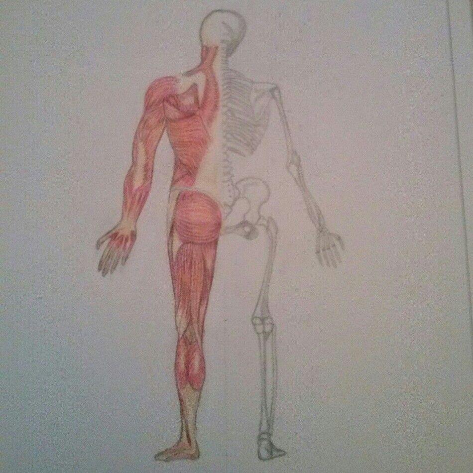 Diseño aplicado a la caracterización. Parte posterior del cuerpo ...