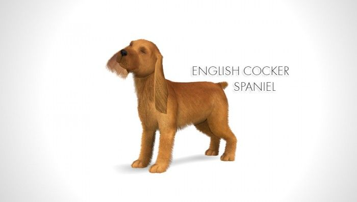 Morganabanana Sims Improved English Cocker Spaniel By Morgana