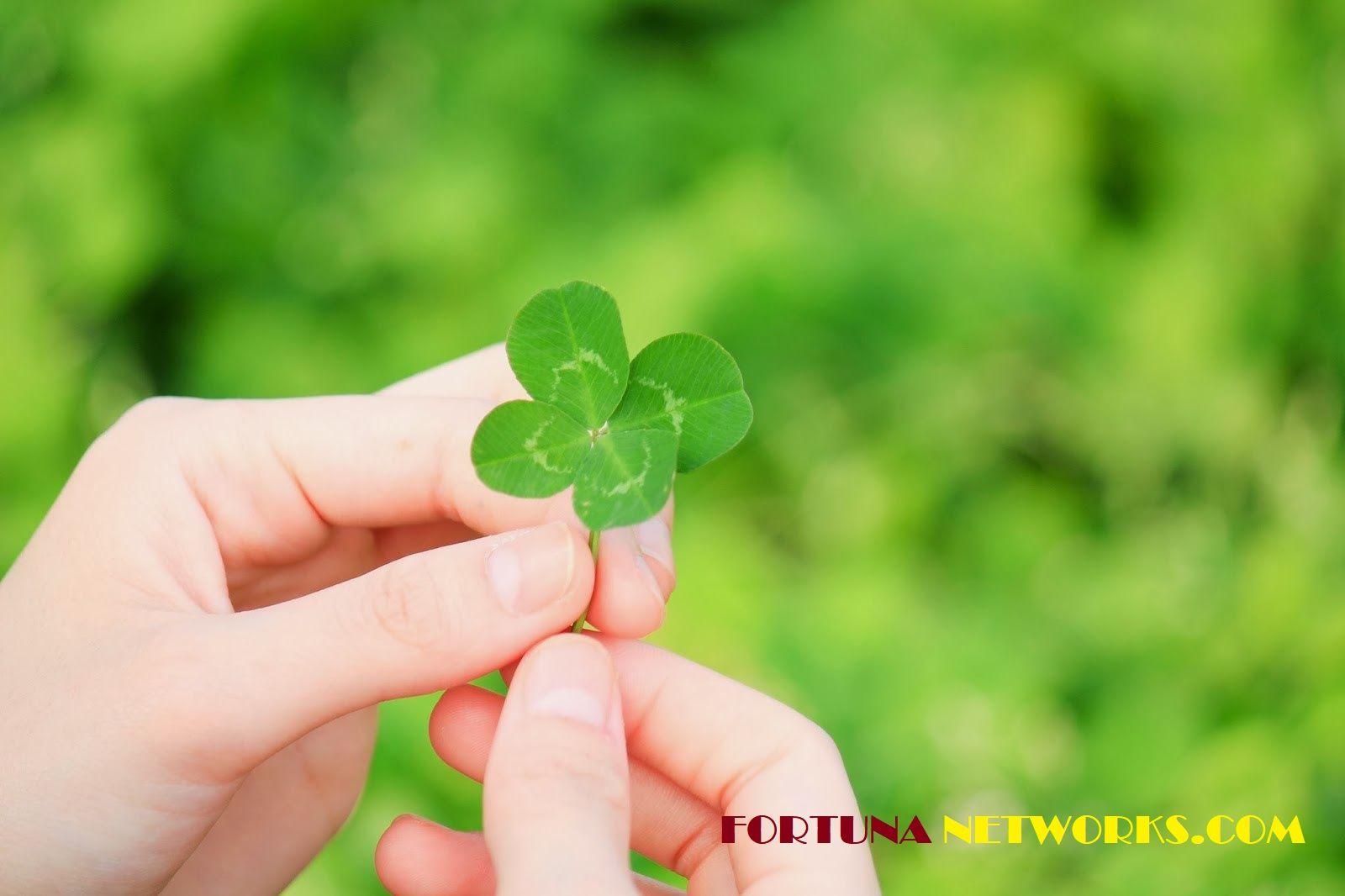 Meraih Sukses Pendapatan 100 000 Sebulan Dengan Menjual Daun Semanggi Being Used Luck Of The Irish Things To Sell