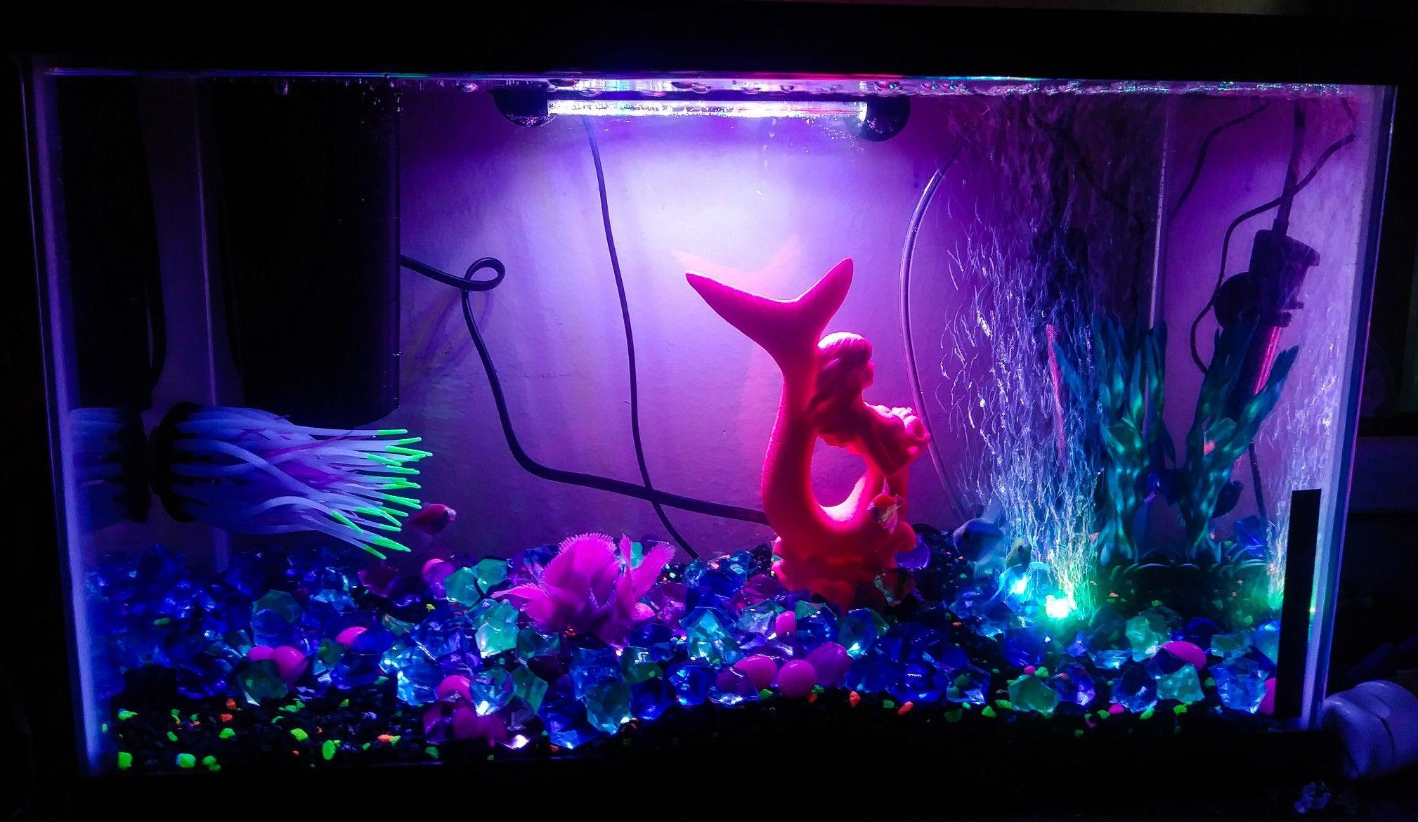 10 gallon glo fish tank contains: glo fish black+rainbow flourescent