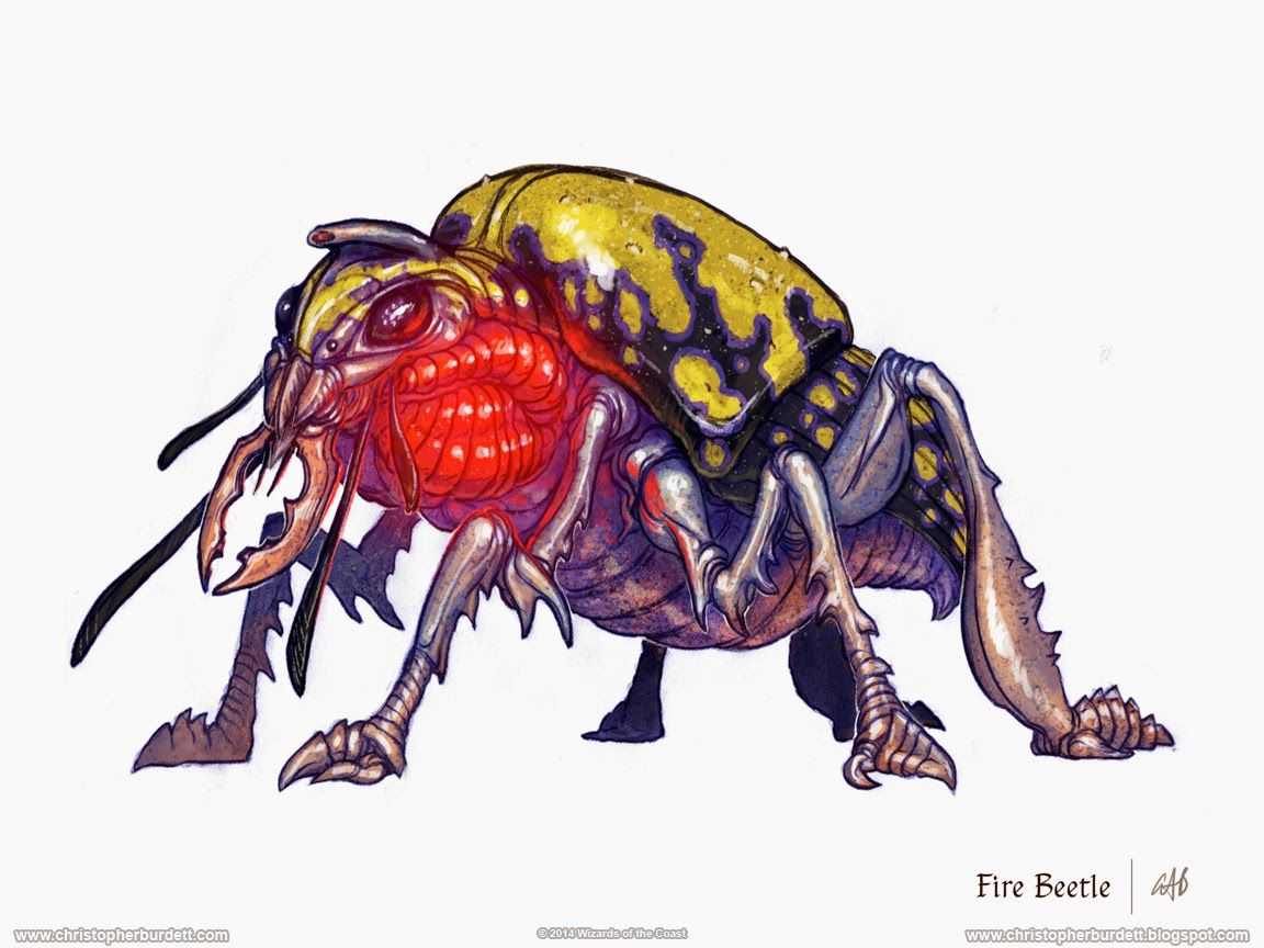 Image result for pathfinder bombardier beetle | RPGs in 2019