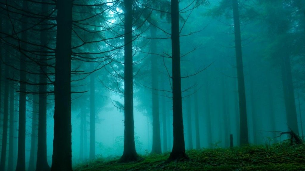 Mysterious Forest Hd Wallpapers Hd Wallpapers Inn Bosque