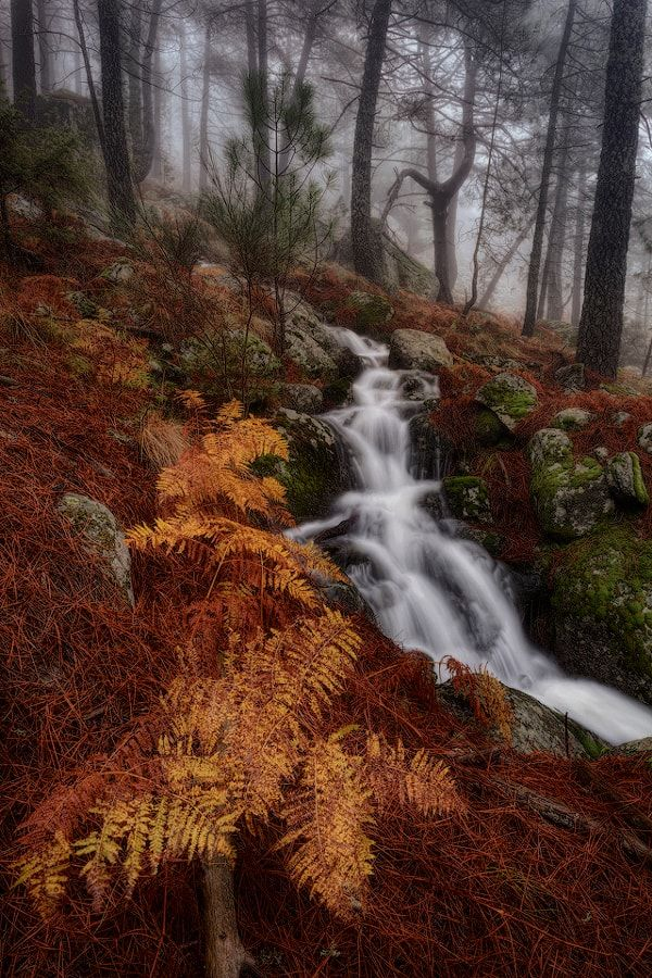 Misty forest (Spain) by frjm / 500px