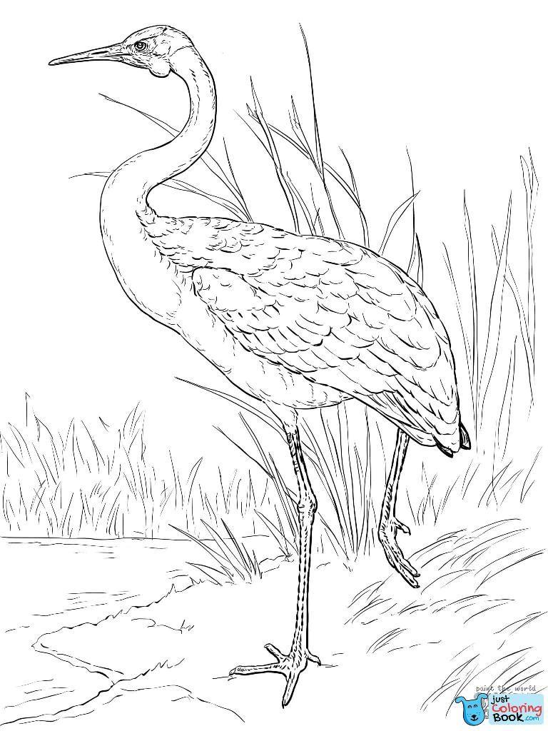 Australian Brolga Coloring Page Free Printable Coloring Pages