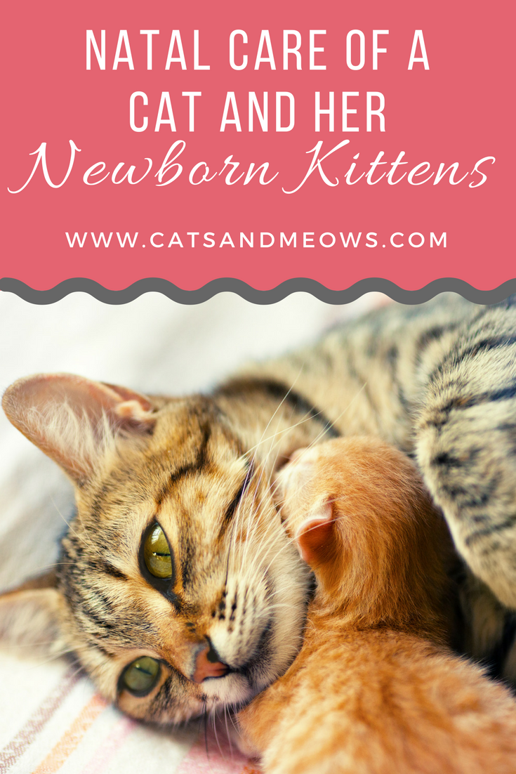 Post Natal Care Of A Cat And Her Newborn Kittens Newborn Kittens