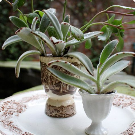made with love: egg cup planters