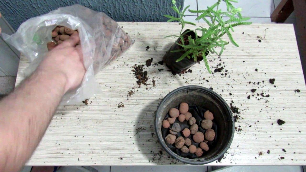 Como Plantar Lavanda Em Vaso Ohanalinhares At Hotmail Pinterest - Como-plantar-lavanda