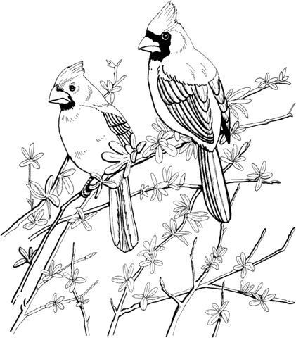 Two Red Cardinals Coloring Page From Northern Cardinal Category Select From 20946 Printable Crafts Of Cartoon Bird Coloring Pages Coloring Pages Bird Drawings