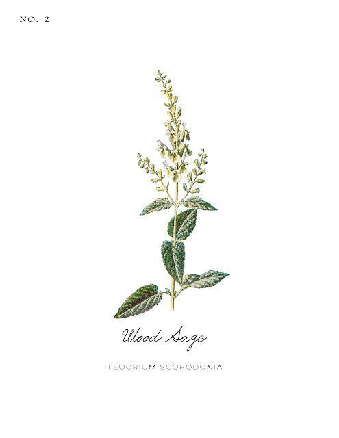 Free Vintage Inspired Botanical Printables Drawings Botanical