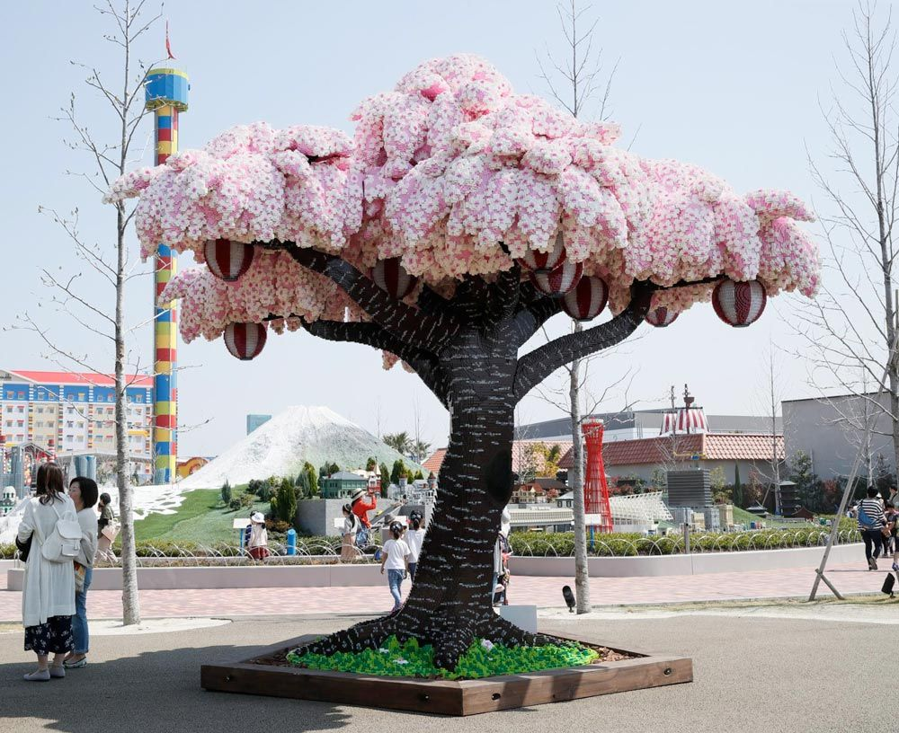 Pictures Of The Day May 1 2018 Blossom Trees Cherry Blossom Japan Legoland