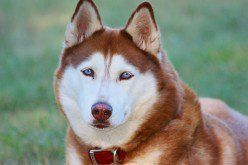 10 Most Aggressive Dog Breeds Temperament Ratings And Information