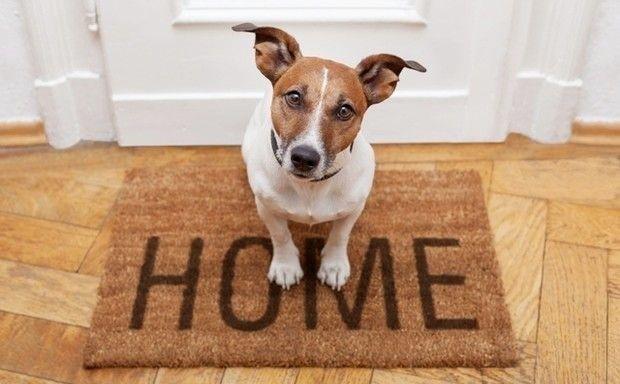Tu ste doma! | Bonami