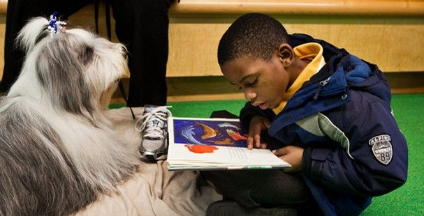 Brian Taylor, a 7-year-old first-grader at Memphis College Prep, reads to Sammy, a bearded collie, during the Central Library's Paws for Reading program. Brian declared he prefers reading to dogs over people. (Kyle Kurlick/The Commercial Appeal)