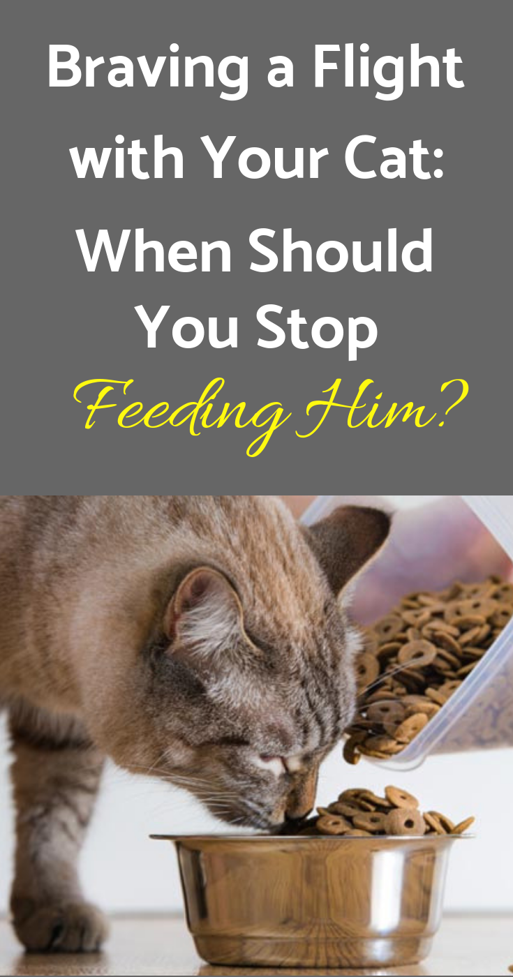 Braving A Flight With Your Cat When Should You Stop Feeding Him