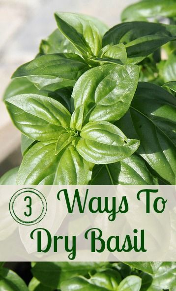 Essential Oil - The Complete Uses and Benefits Guide Basil is one of my favorite herbs. Here are 3 ways to dry it so that the flavor really lasts.Basil is one of my favorite herbs. Here are 3 ways to dry it so that the flavor really lasts.
