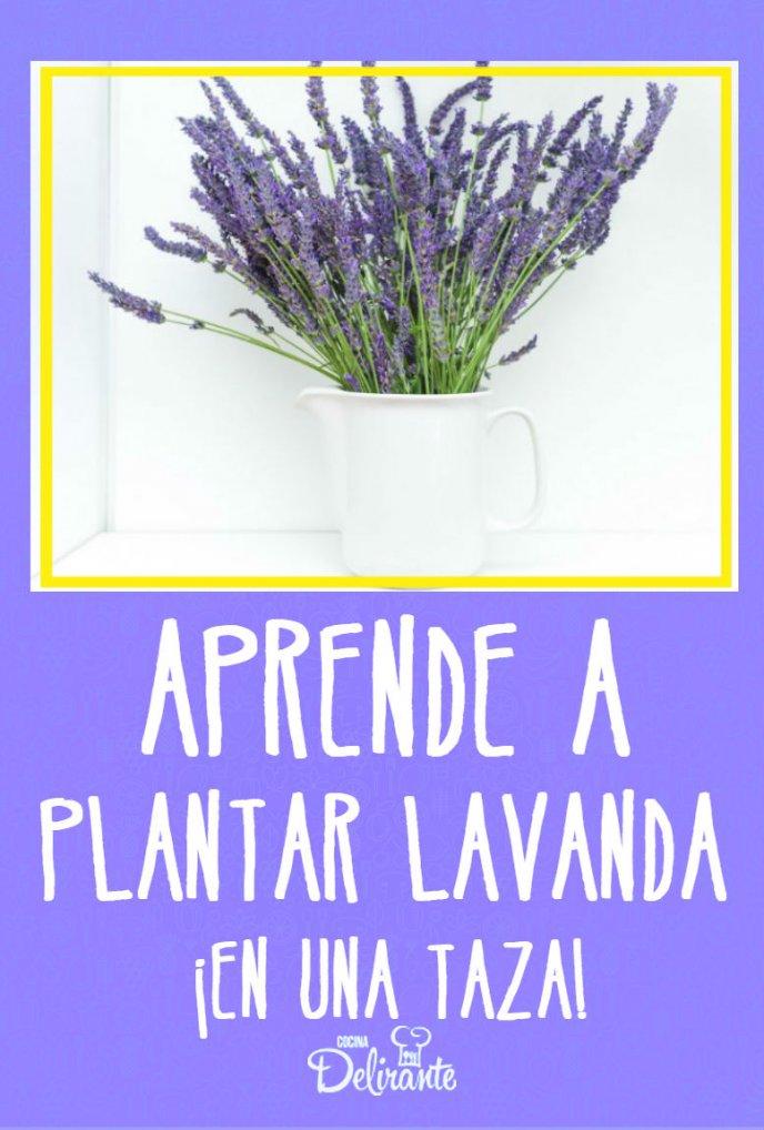 Aprende a plantar lavanda en una taza y perfuma tu hogar