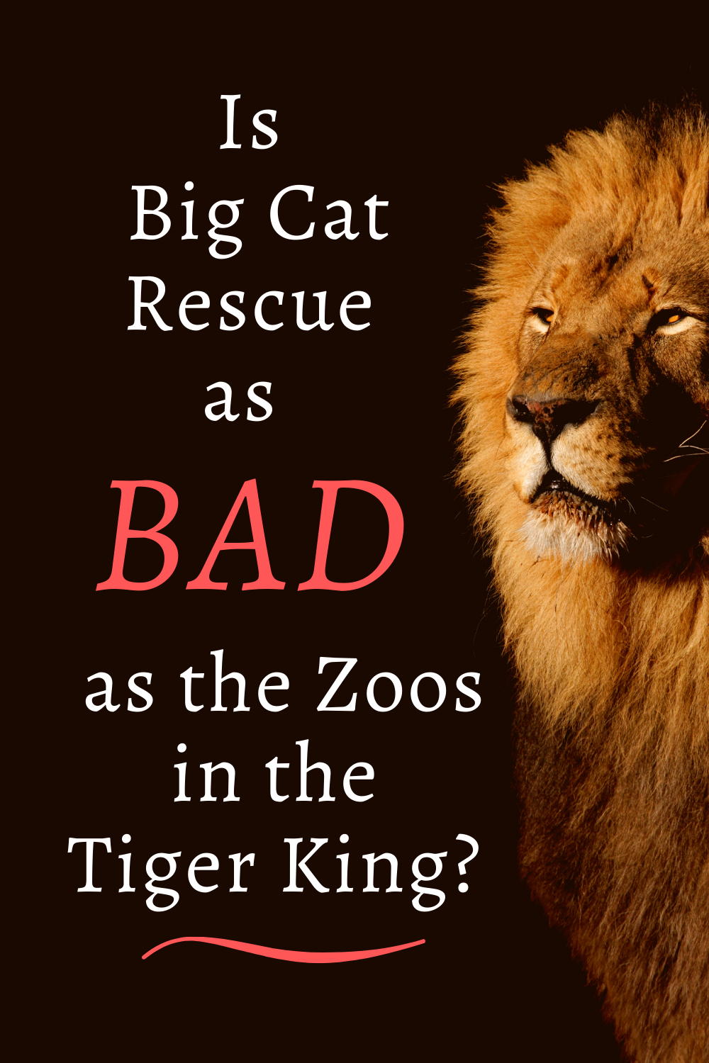 Is Big Cat Rescue as Bad as the Zoos in Tiger King? in