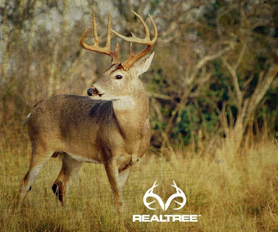 Whitetail buck wallpapers hd wallpapers pinterest hd whitetail buck wallpapers voltagebd Image collections
