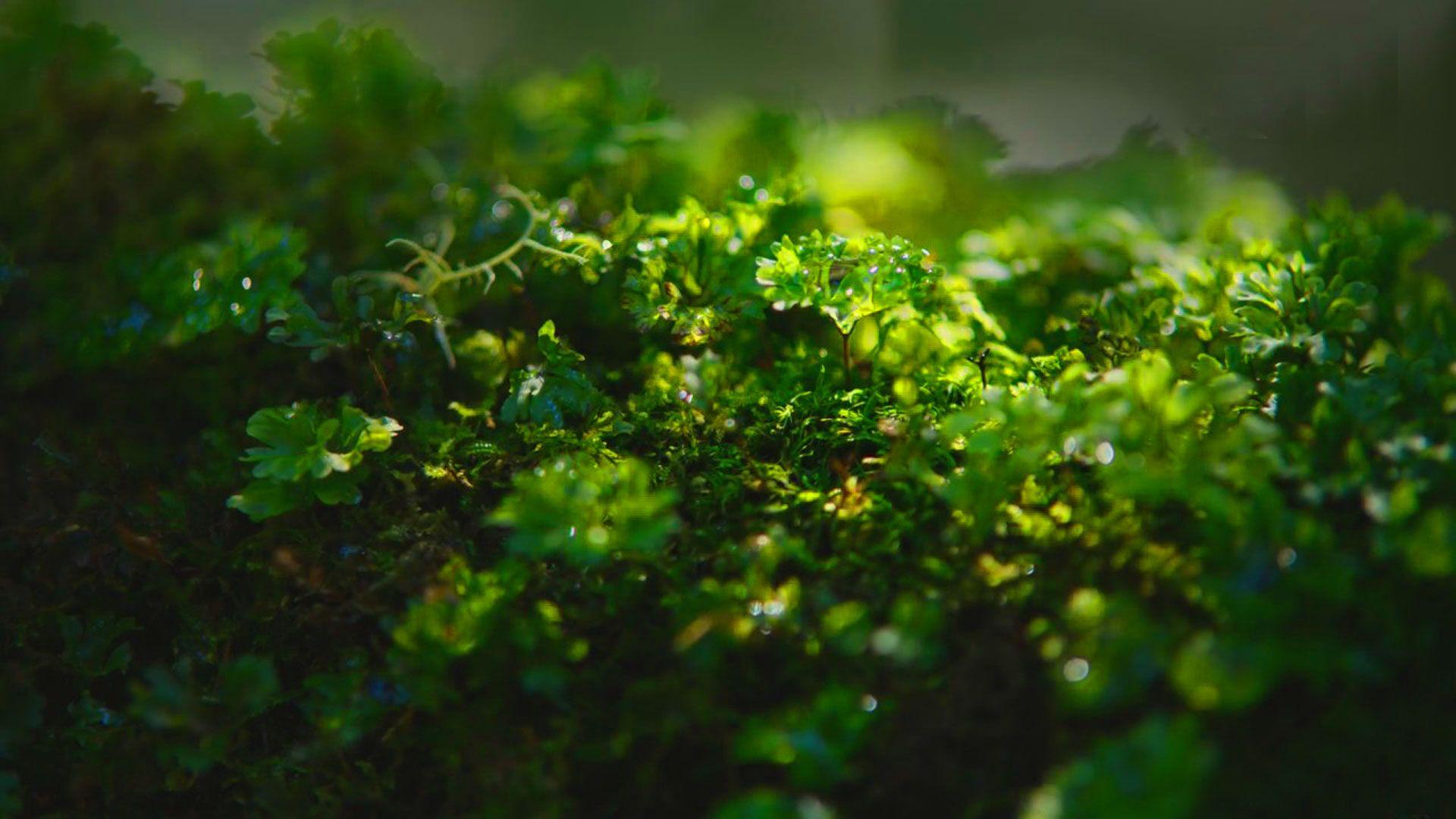 hd pics photos stunning attractive nature green small plants macro closeup new hd desktop background wallpaper
