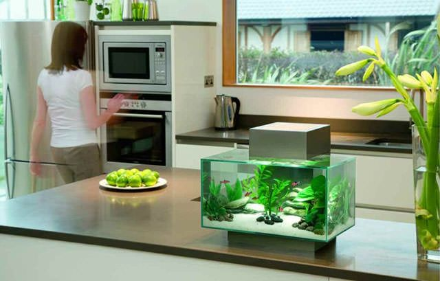 Kitchen Island Fish Tank small fish tanks | most of people love under water life the
