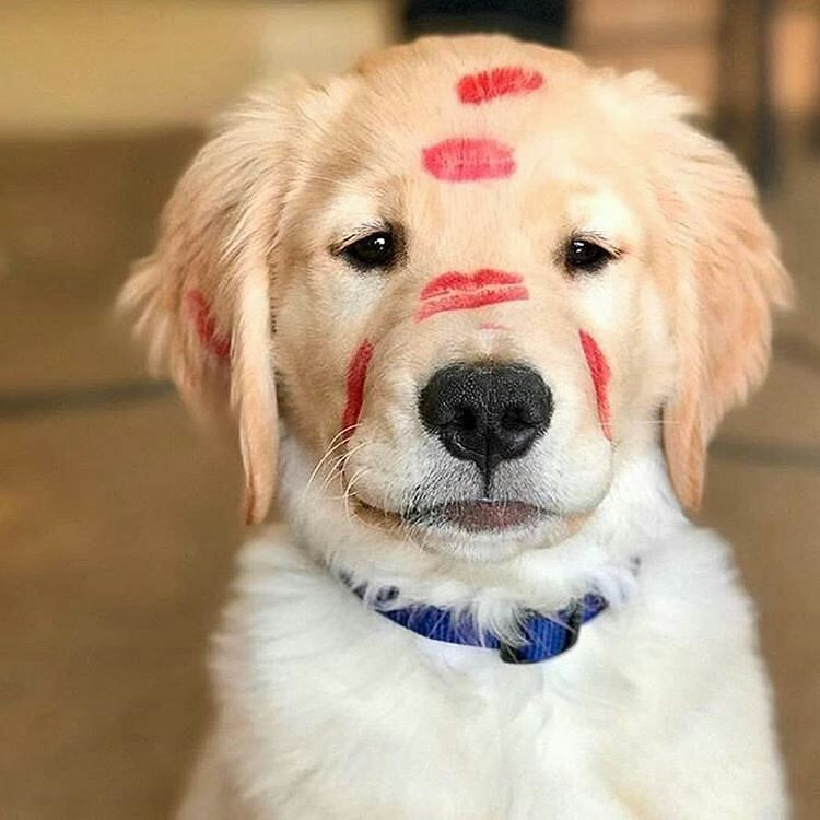 Puppy Kisses Cute Dogs Cute Puppies And Kittens Cute Puppies