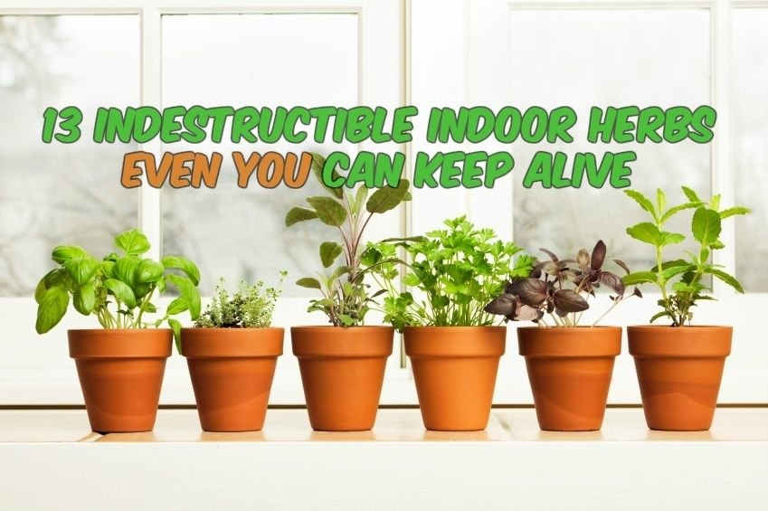 13 Indestructible Indoor Herbs Even You Can Keep Alive Growing